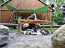 Sommerlager 2012 der Pfadfinder_7